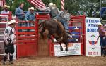 Image for PROFESSIONAL RODEO
