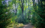 Image for Science On Tap - A Path in the Woods: How Forests Can Help Stop Climate Change